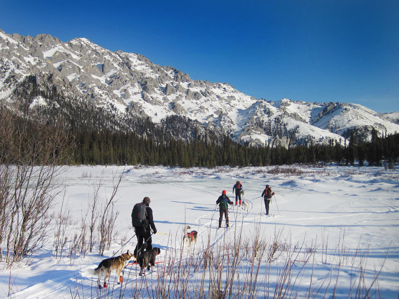 Alaska snowshoe tours, dog-mushing trips, hut to hut ski tours